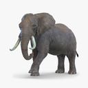 African Elephant 3D models