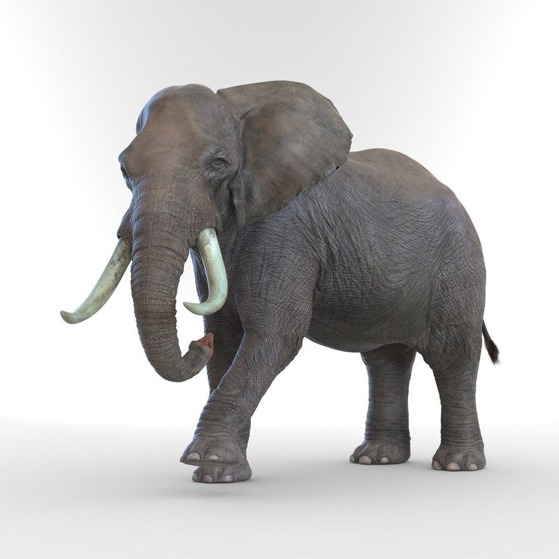 max elephant rigged animate