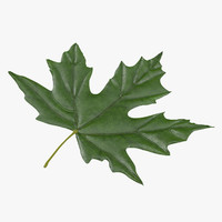3d green maple leaf model