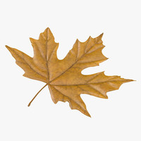 yellow maple leaf c4d
