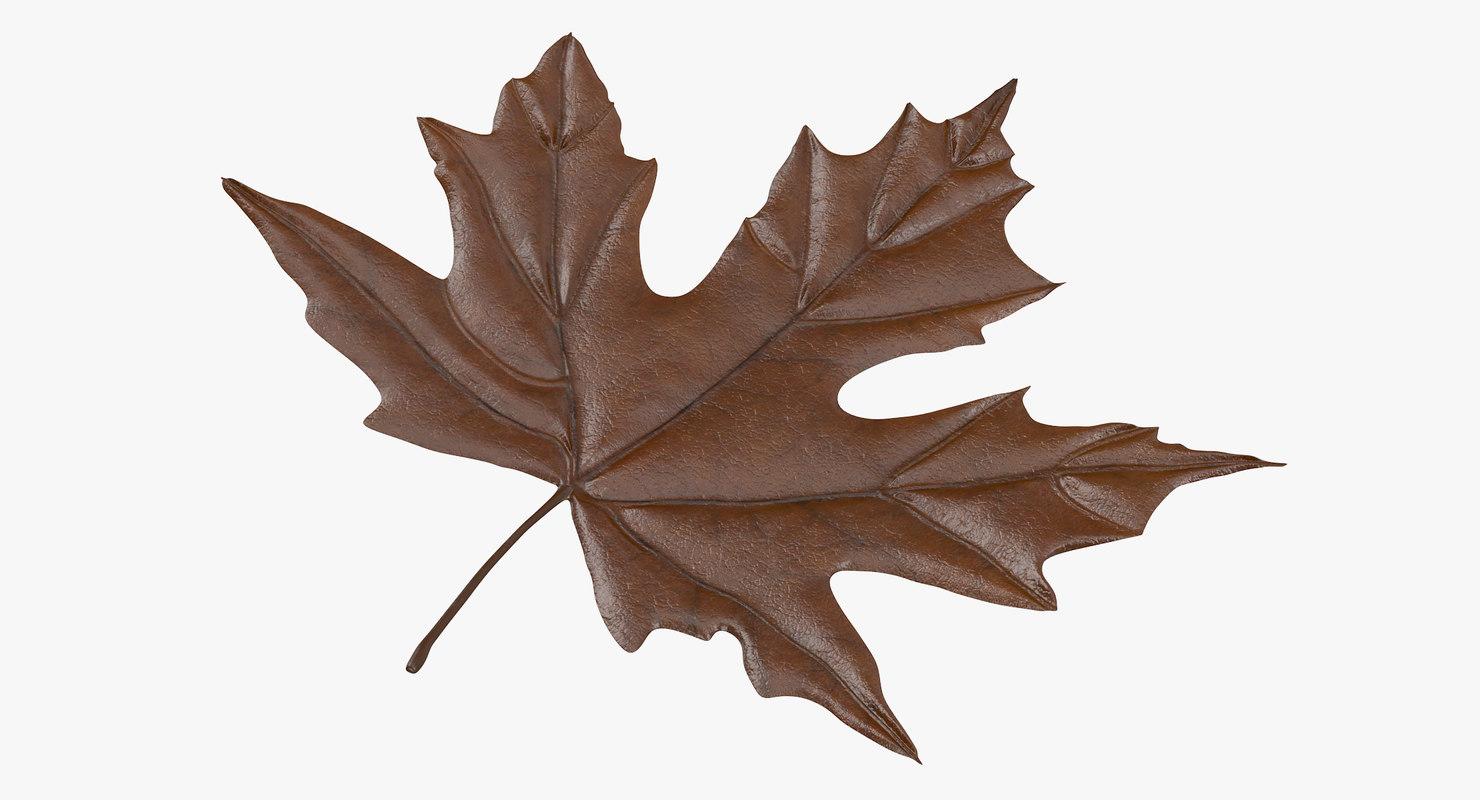 3d model brown maple leaf