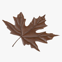 3d model brown maple leaf