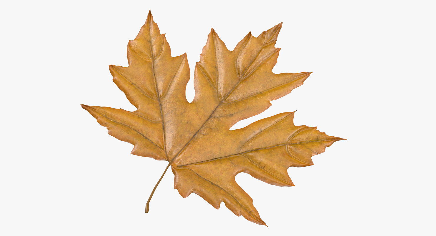 max yellow maple leaf