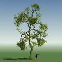 Rainforest Tree Custom Season 01