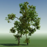 tree forest rainforest 3d max