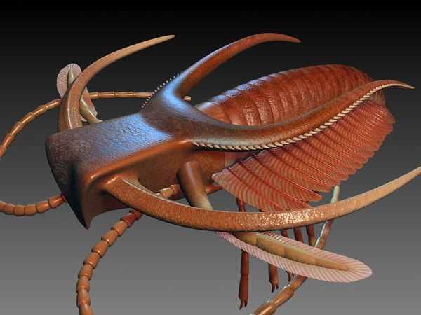 marrella splendens 3d max