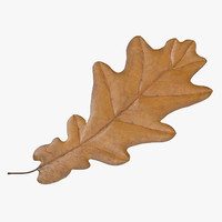 3d yellow oak leaf model