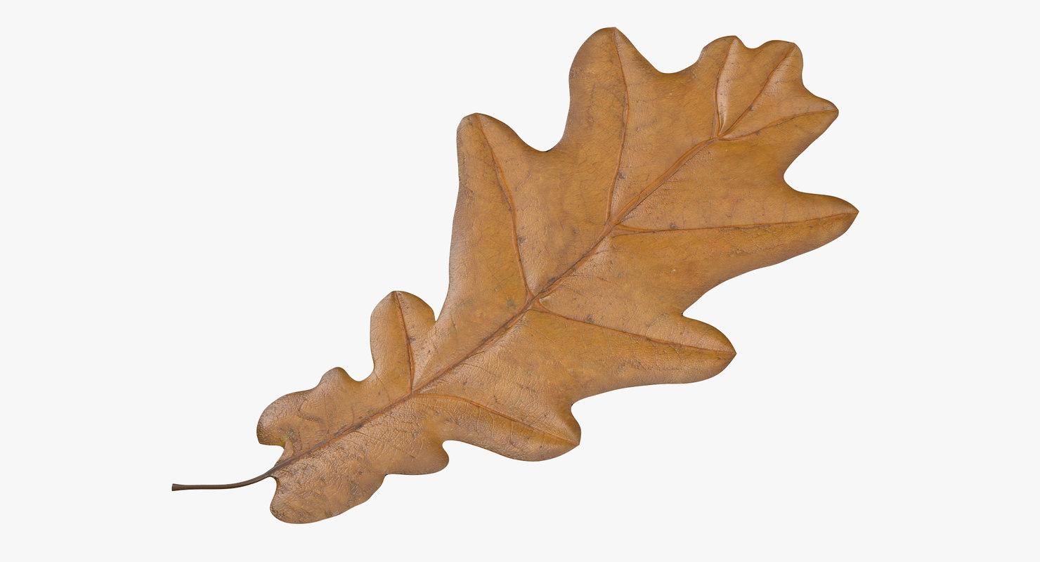 3d yellow oak leaf model