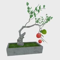 3d bonsai apple tree model
