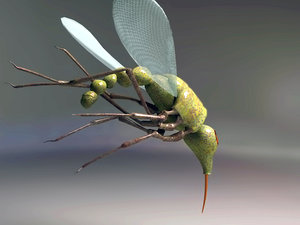 3d model of mosquito