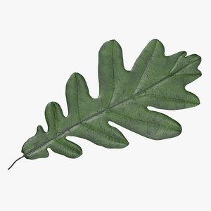 3d model green oak leaf