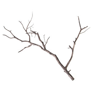 branch decoration 3d model