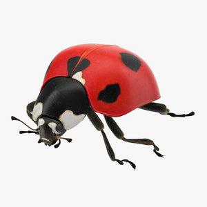 ladybug 02 3d model