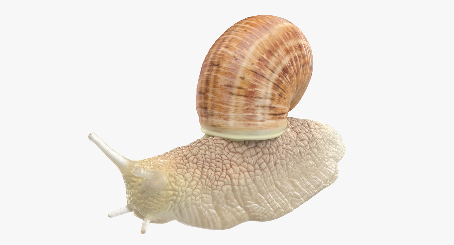 snail 02 max