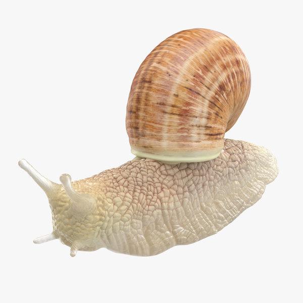 snail 03 max