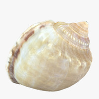 3d model of seashell sea shell