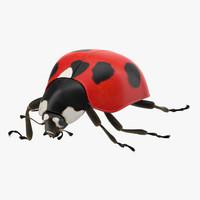 3d model ladybug lady bug