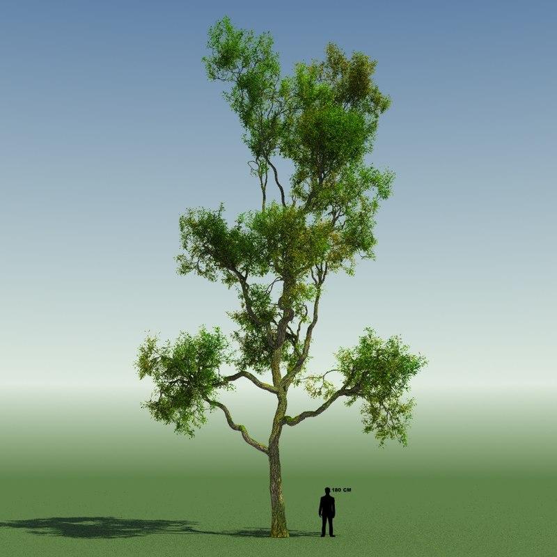tree forest rainforest 3d model