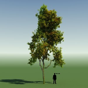 3d tree forest rainforest
