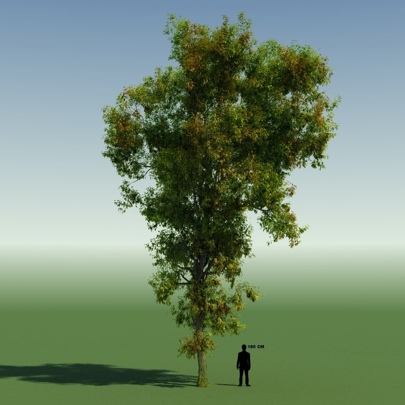 free tree forest rainforest 3d model