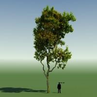 Rainforest Tree Custom Season 05