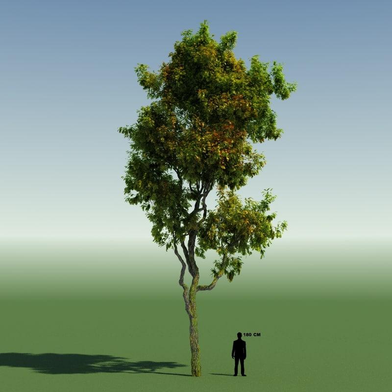 3d tree forest rainforest model