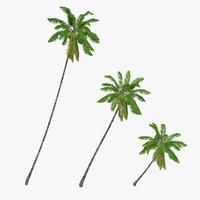 Coconut palm tree 04 - Low Poly