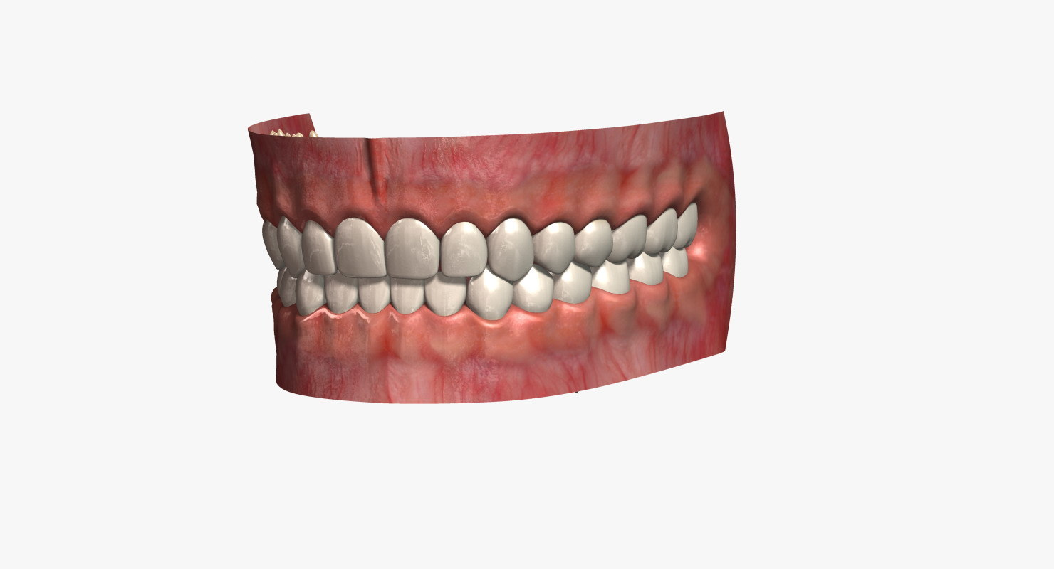 3ds human teeth 2