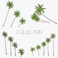 Coconut palm tree Collection - Low Poly