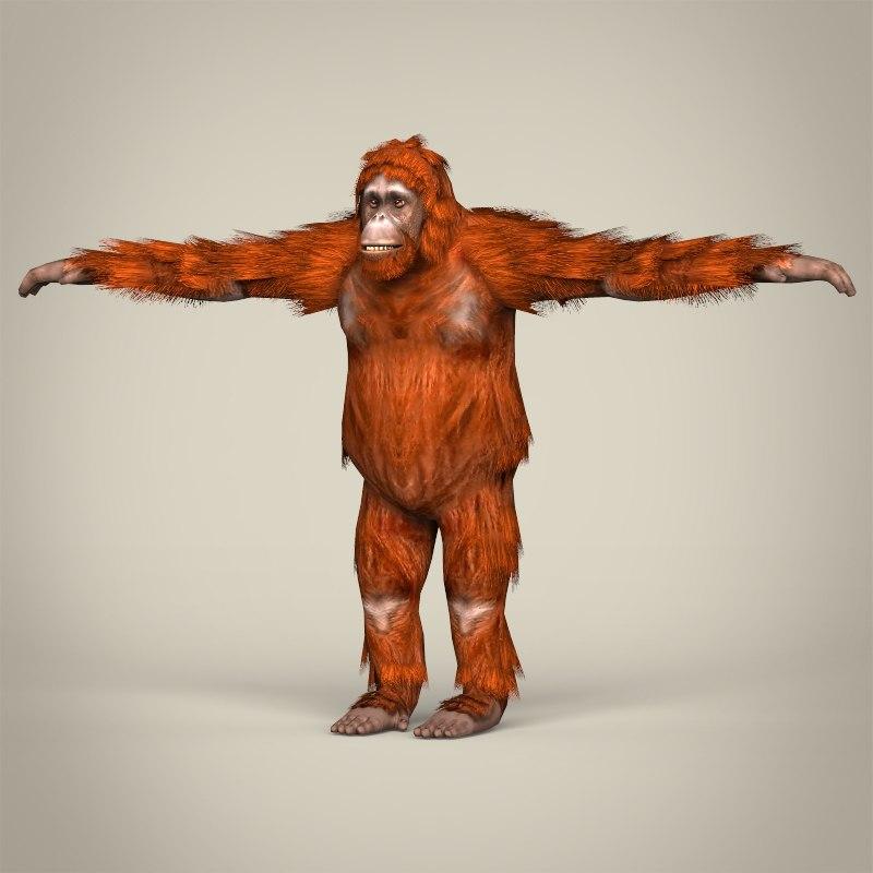 realistic orangutan 3d model