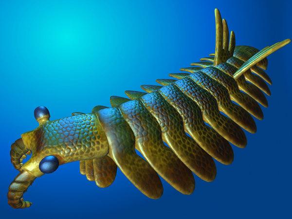 max anomalocaris extinct arthropods