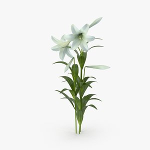 easter lily c4d