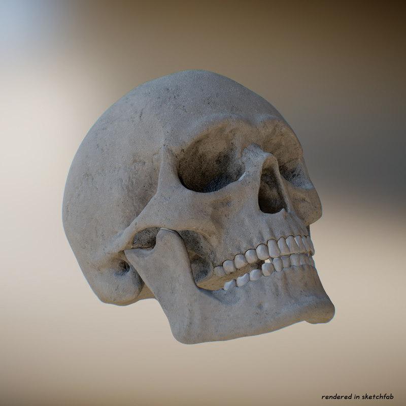human skull 8k 3d obj