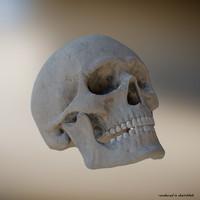Skull 3D 8K skeletal