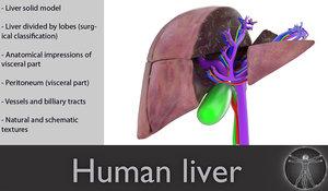 3d human liver