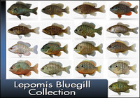 3d model of lepomis bluegil