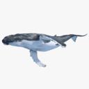 marine mammals 3D models