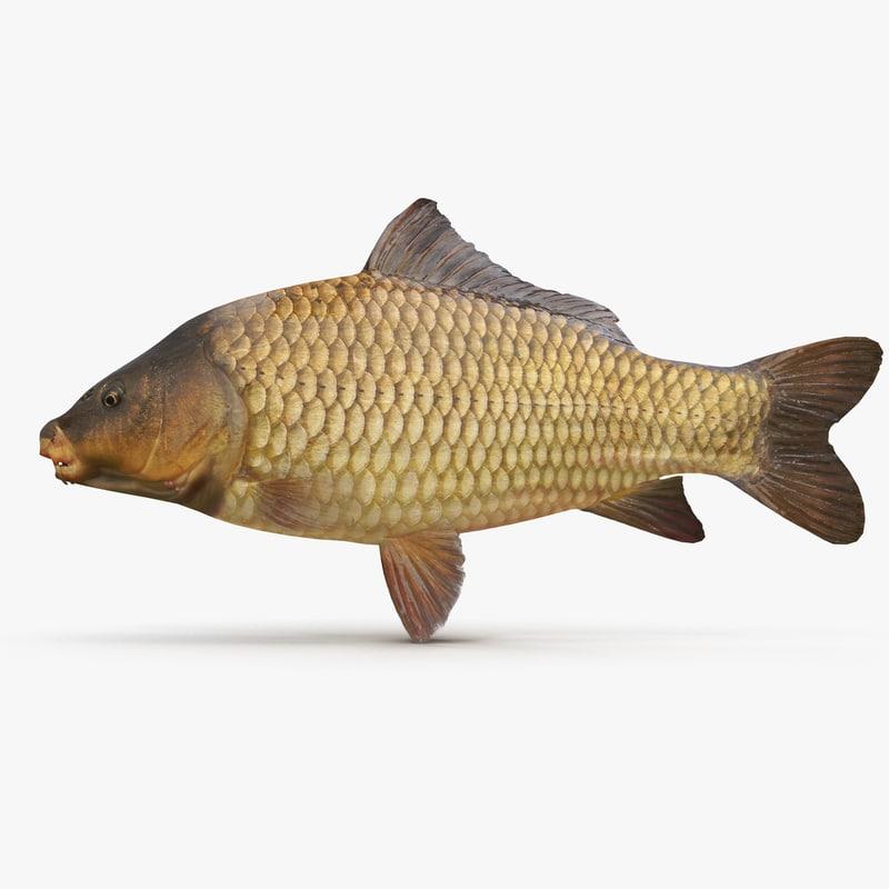 3d carp fish