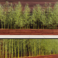 bamboo trees max