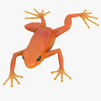 mantella frog pose 3 3d model
