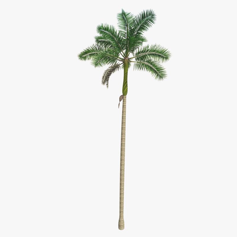 florida royal palm tree 3d obj