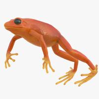 mantella frog pose 4 max