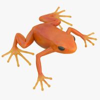 Mantella Frog Pose 2 3D Model