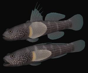 3d tridentiger obscurus swimming model