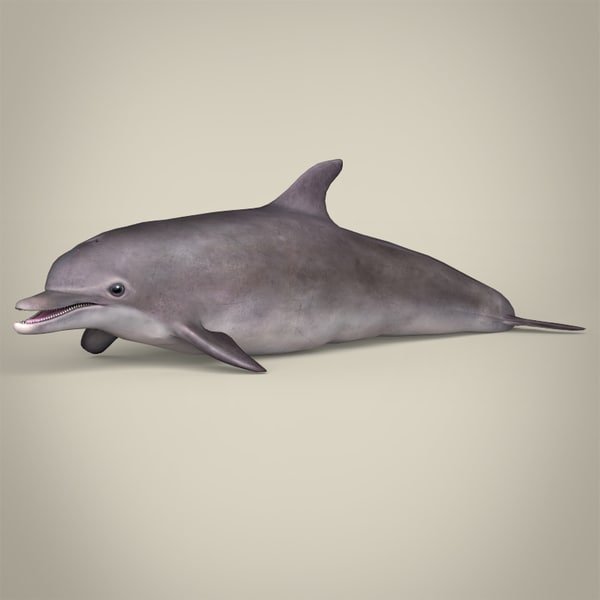 realistic dolphin 3d max