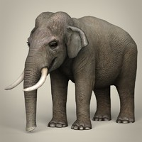 Low Poly Realistic Elephant