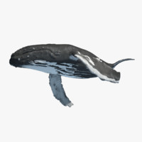 max baby humpback whale rigged