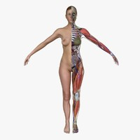 ultimate complete female anatomy 3d obj