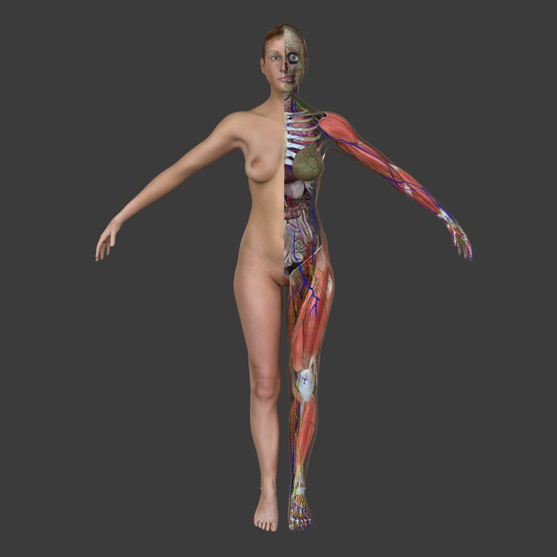 Complete Female Anatomy 3d Obj