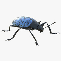 3d gibbifer californicus beetle